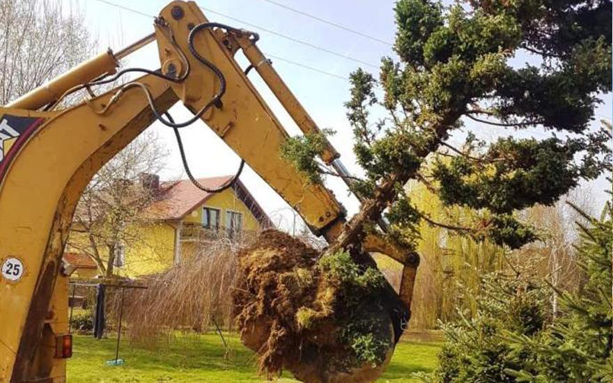 Koparka wyrywająca drzewo